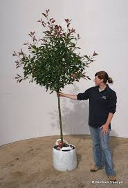 10 best half standard trees grown at barcham trees plc ely