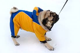 Tips To Take Care Of Skin In Winter 11 Winter Weather Tips As Told By Adorable Dogs Blogs Cdc