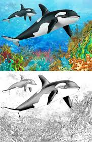 the coral reef killer whale with coloring page u2014 stock photo