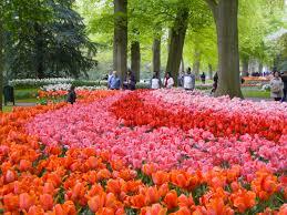 keukenhof flower gardens keukenhof gardens netherlands u2022 may 2013 u2022 douglas stebila