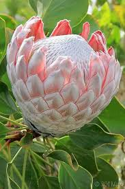 best 25 tropical flowers ideas on pinterest hawaii flowers