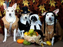 thanksgiving do s and dont s for your pets pets plus pet center
