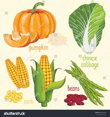 set vegetables mix vector isolated healthy stock vector 444650494