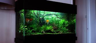 Aquarium Aquascapes Bubbles Aquarium Aquascapes Tank Setups Projects