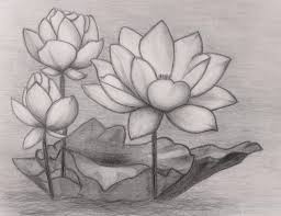 lotus flower pencil drawing drawing art gallery