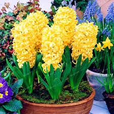 100 easy indoor flowers the 12 best flowering houseplants
