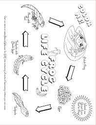 pictures on life cycle of a plant worksheet for kindergarten
