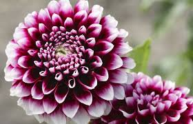 Pictures Of Beautiful Flowers In The World - most beautiful flower species in the world 2017 top 10 list