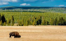 what year is the first thanksgiving a guide to yellowstone national park travel leisure
