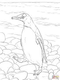 gentoo penguin walks coloring page free printable coloring pages