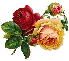 imagenes de rosas vintage rosas vintage imagen gratis en pixabay