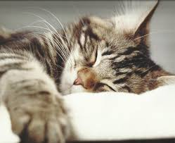 Small Beautiful Pics Beautiful Cats Photo Wallpapers Beautiful Cats Pictures