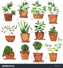 set doodle home plants painted by stock illustration 602395145