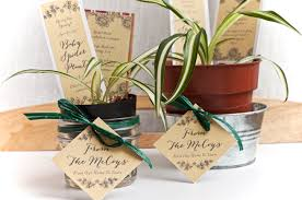 house warming gift idea baby spider plant housewarming gifts gift favor ideas from