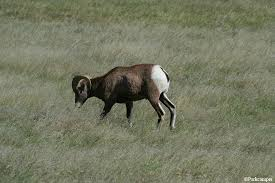 South Dakota wild animals images Badlands national park wildlife jpg