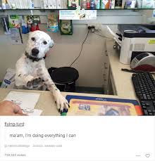 Funny Animal Memes Tumblr - 15 animal posts on tumblr that are impossible not to laugh at