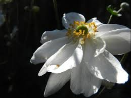 Moon Flowers Moon2 Jpg Width U003d500 U0026height U003d375 9213759213759