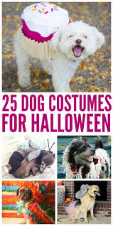 540 best costumes images on pinterest halloween stuff happy