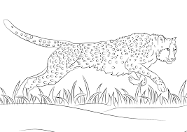 cheetah coloring pages cheetah runs coloring pages 0 best