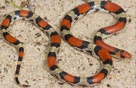 How To Find Snakes In Your Backyard Slithering In Nj Meet The 22 Snake Species Of The Garden State