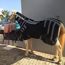 equiperform portugal equine bodywork therapies