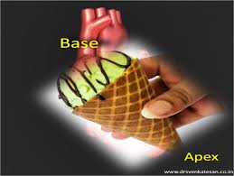 Anatomy Of The Heart And Its Functions Apex Vs Base Of Heart Dr S Venkatesan Md