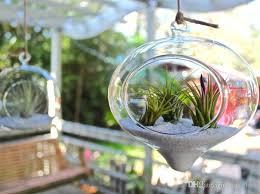 onion shape glass hanging terrariums glass succulent garden indoor