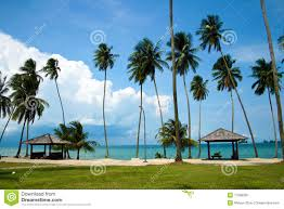 beautiful beach with palm trees royalty free stock photo image