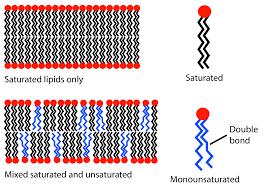 file lipid unsaturation effect svg wikimedia commons