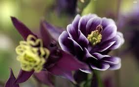 Beautiful Flowers Beautiful Flower Photos