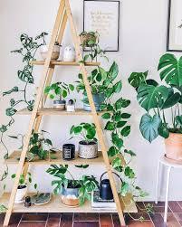 instagram house plant ideas pinterest instagram plants and