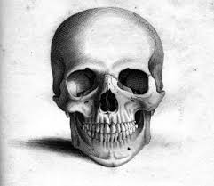 skulls drawings free download clip art free clip art on