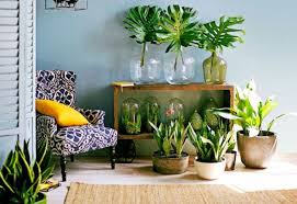 35 indoor houseplant decoration ideas wartaku net