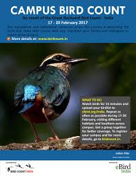 great backyard bird count 2017 page 4 of 6 bird count india