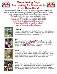 8 month old boxer dog weight jenny white professional dog trainer with experience in asheville nc