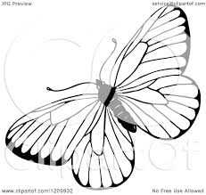 clipart of a black and white butterfly royalty free vector