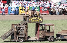bobby kerr mustang rodeo photographry shanna hatfield
