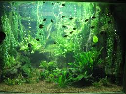 skoolz of fish skoolz open your one stop shop for discount freshwater fish supplies