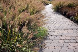 landscaping with ornamental grasses guide with beautiful