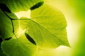 photosynthesis quiz do you know how plants make food