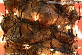 stock photo bark of a palm tree with christmas lights