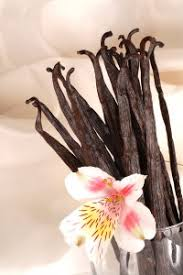 vanilla orchid vanilla the sweet taste of orchids orchid care zone