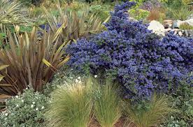 plants native to san diego five plants for magnificent landscaping in san diego papitto