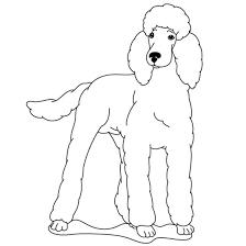 coloring sheets nova u0027s standard poodles