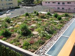 roof garden plants green roof inspection internachi