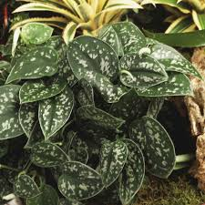 12 hard to kill plants for people with black thumbs