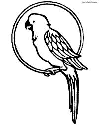 parrot bird coloring pages for kids u003e u003e disney coloring pages