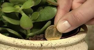 plante de bureau feng shui vous désirez avoir plus d argent voici une astuce simple pour y