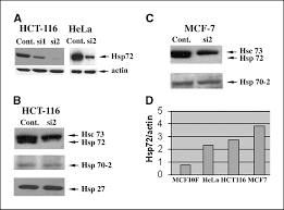 high levels of heat shock protein hsp72 in cancer cells suppress