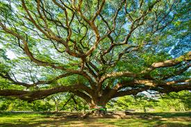 beautiful big tree bestwallsite
